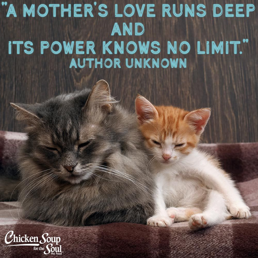 Cats image by on Adorable Animals Animal quotes