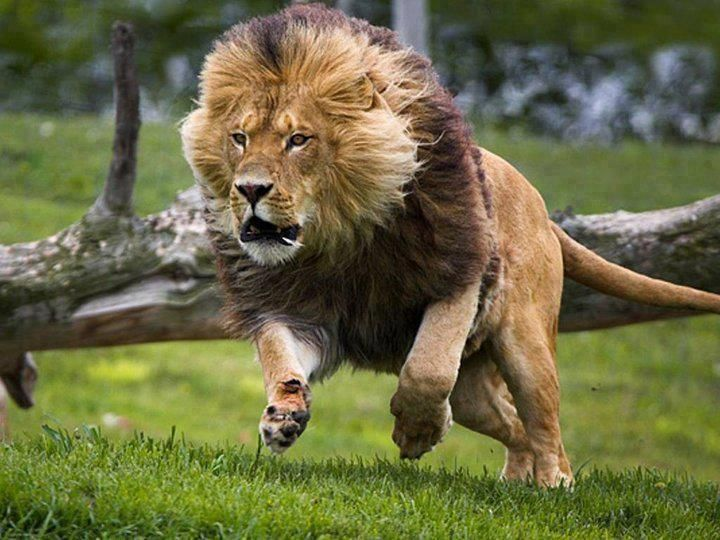 картинки самых сильных зверей мира стиль известен