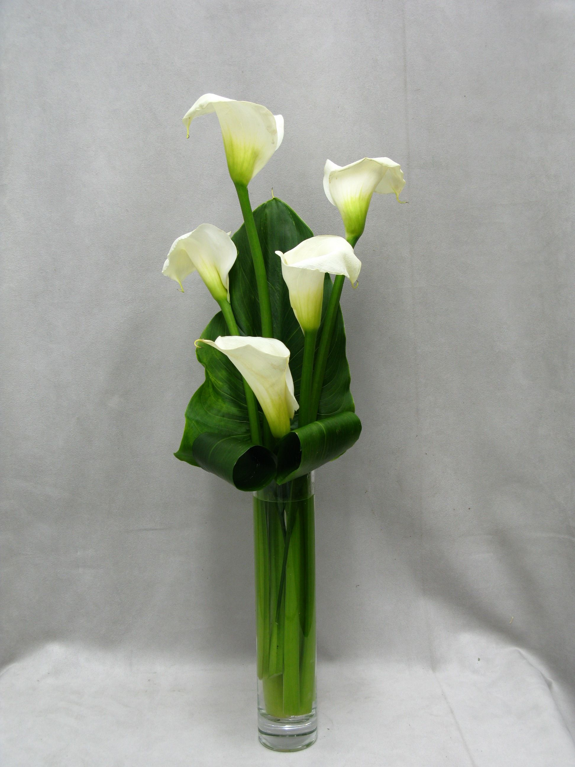 Calla lilies are sophisticated but stunning in this tall vase calla lilies are sophisticated but stunning in this tall vase they are a perfect flower reviewsmspy