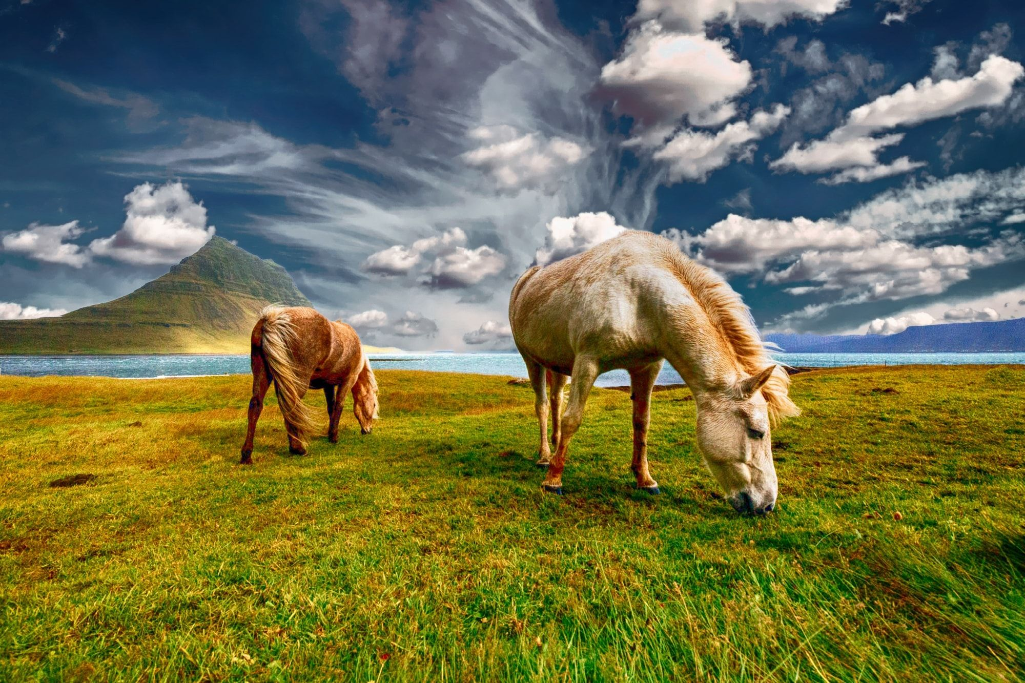 Must see Wallpaper Horse Landscape - f204d736bbe4aa15087f558bc232e400  You Should Have_366320.jpg
