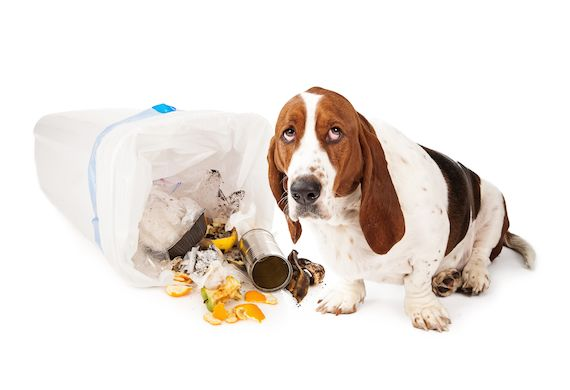 25 Poisons That Can Kill Your Pet Petmd Dog Proof Trash Can