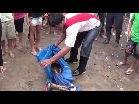 GRAPHIC VIDEO] 11-Year-Old Boy DEVOURED by Piranhas in Peru