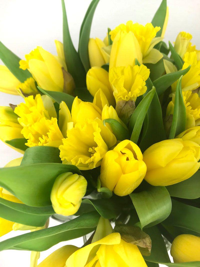 Die Farbe Gelb Tulips Farbe Gelb Gelb Und Gelbe Blumen