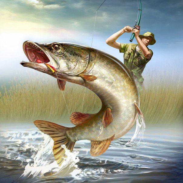 √ hecht fisch zeichnen  fischlexikon
