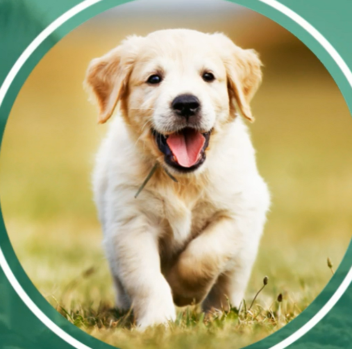 Dog Walking Services In Bangalore Pet Walking And Dog Walkers Bangalore Dog Walking Dog Walking Services Dogs