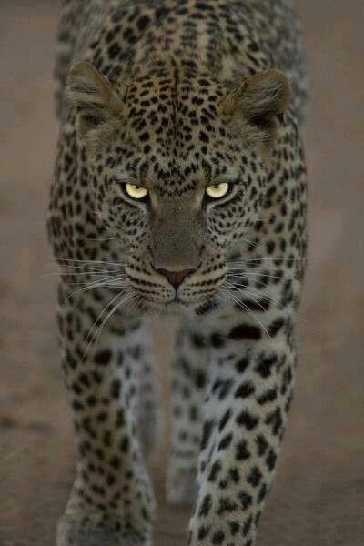 Beautiful eyes on this animal