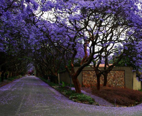 Rboles de colores y jard n japones jardines japoneses for Arboles con flores para jardin