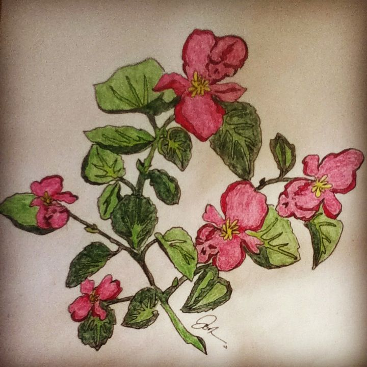 Scarlet Begonias Tattoo Design And Work By J Colburn Reference Photos For Artists Flower Art