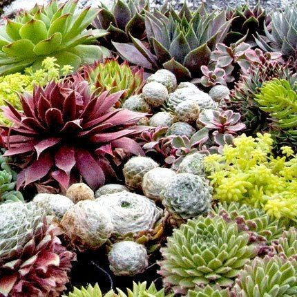 Ready To Feed That Fat Plant Addiction Here Are The Best Places Succulents