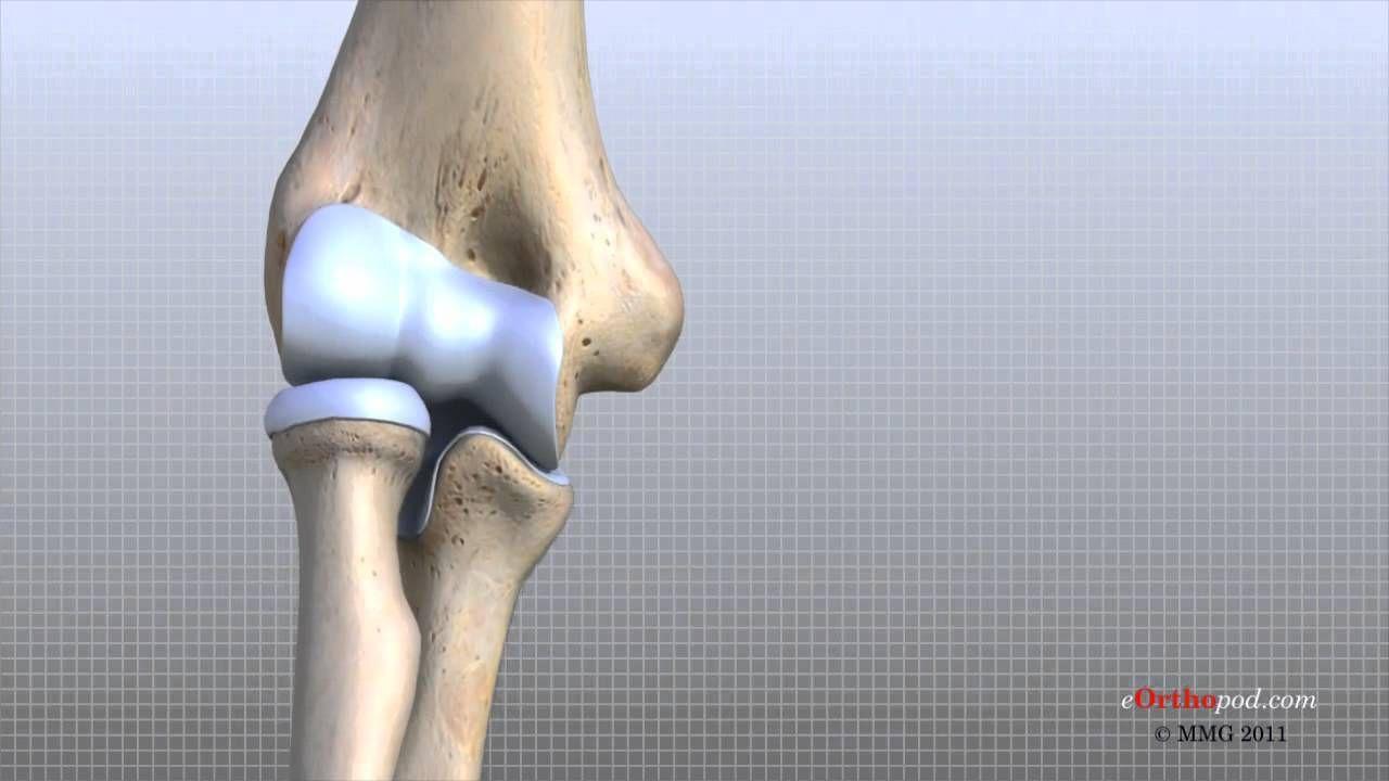 elbow anatomy tutorial:: https://www.youtube.com/watch?v=3l3-5Ij3JZ8 ...