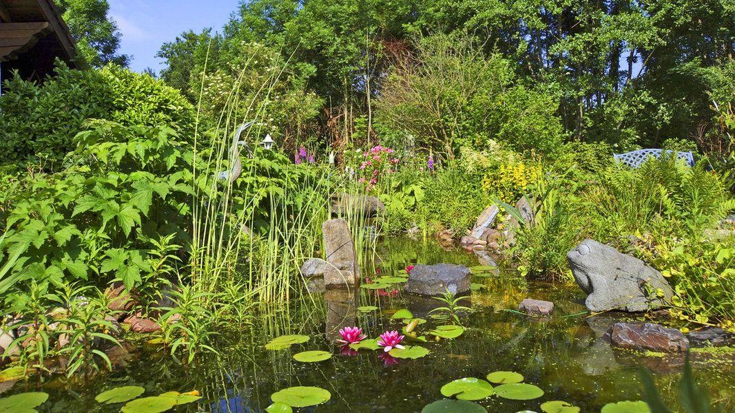 Grünlicher Schleim im Gartenteich zeigt an, dass dort zu viele Algen wachsen. Mit einfachen Mitteln können Gärtner sie zurückdrängen und neuem Wachstum vorbeugen.