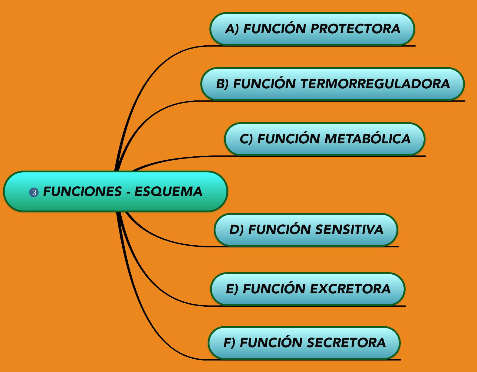 Funciones de la piel, #Función protectora, #Función metabólica ...
