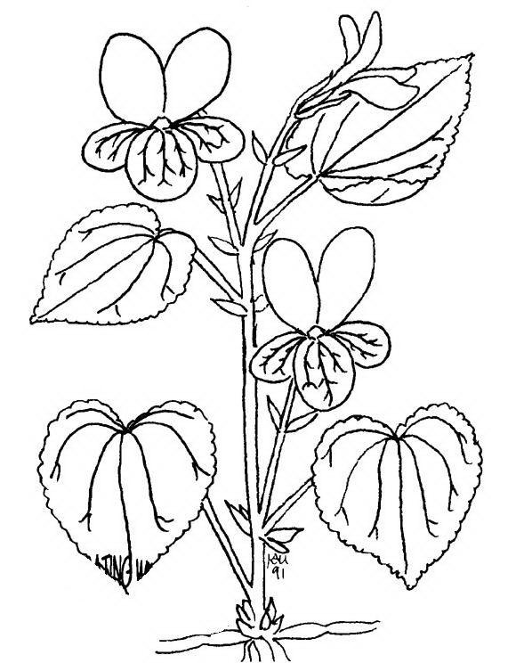 Disegni fiori da colorare e stampare fiori disegno for Fiori grandi da colorare