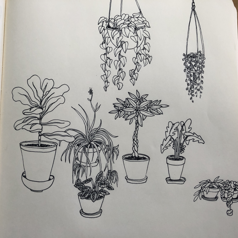 Drawn During A Slow Meeting Houseplants Art Sketchbook Flower Drawing Plant Sketches