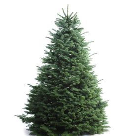 5 6 Ft Fresh Noble Fir Christmas Tree Nursery Products In 2019