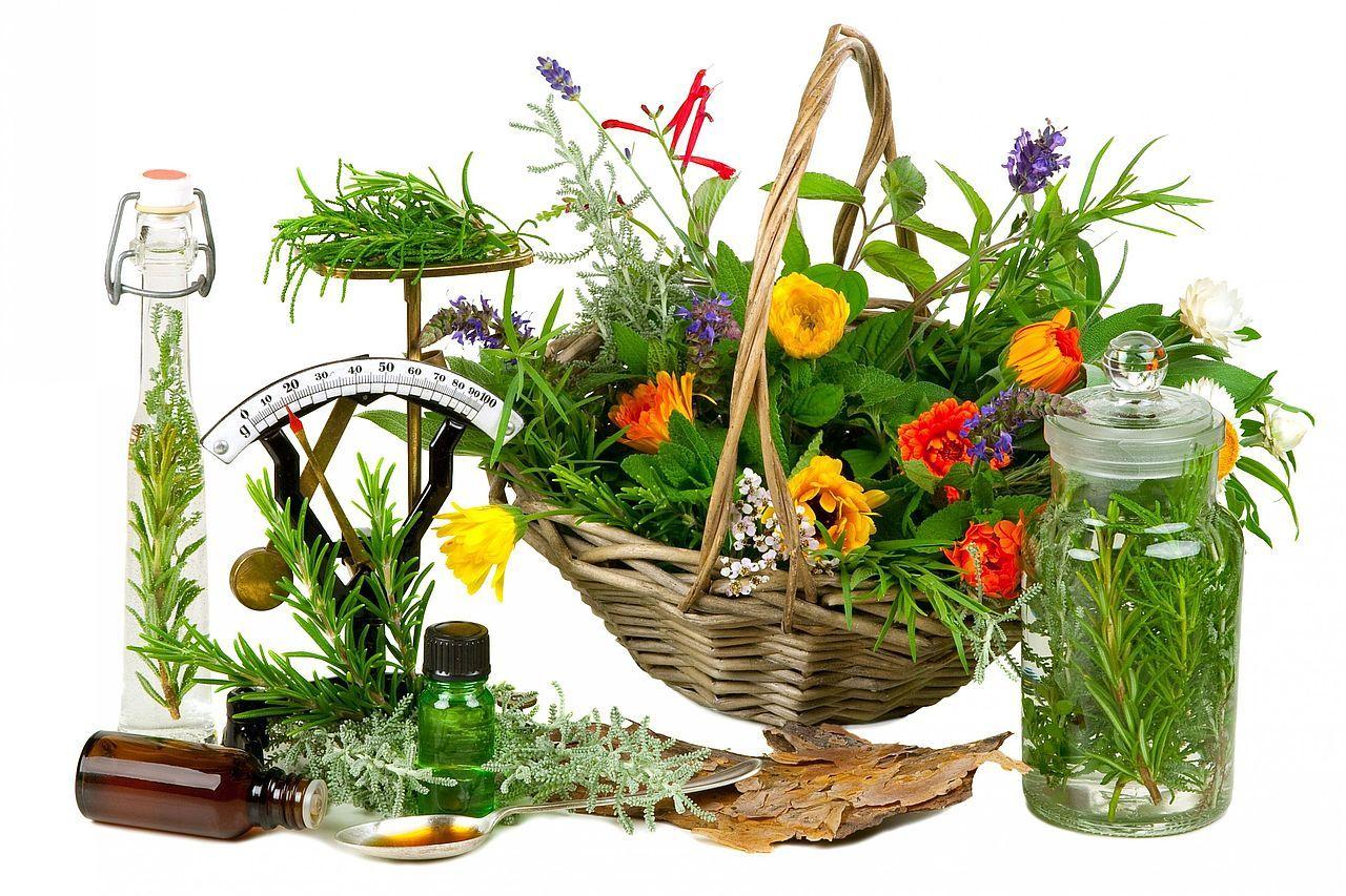 minden természetes fogyókúrás gyógynövény