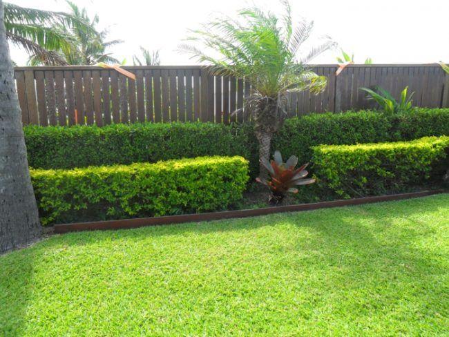 hecke kombination niedrig palme zaun sichtschutz garten | garten, Hause deko