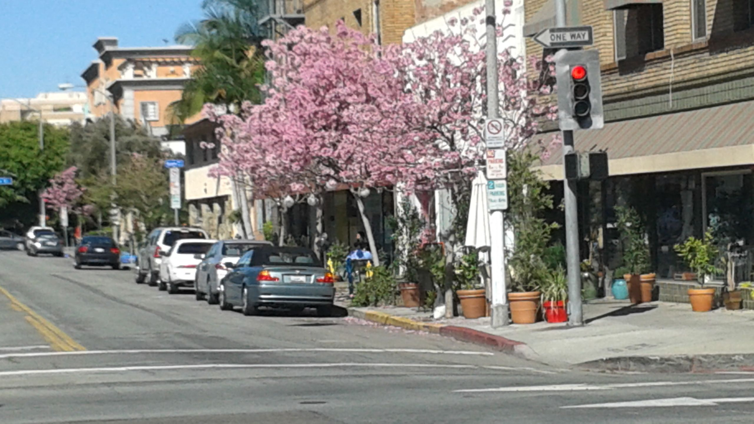 Long Beach Has Pink Trees I See Beauty Pink Trees Beach Street View