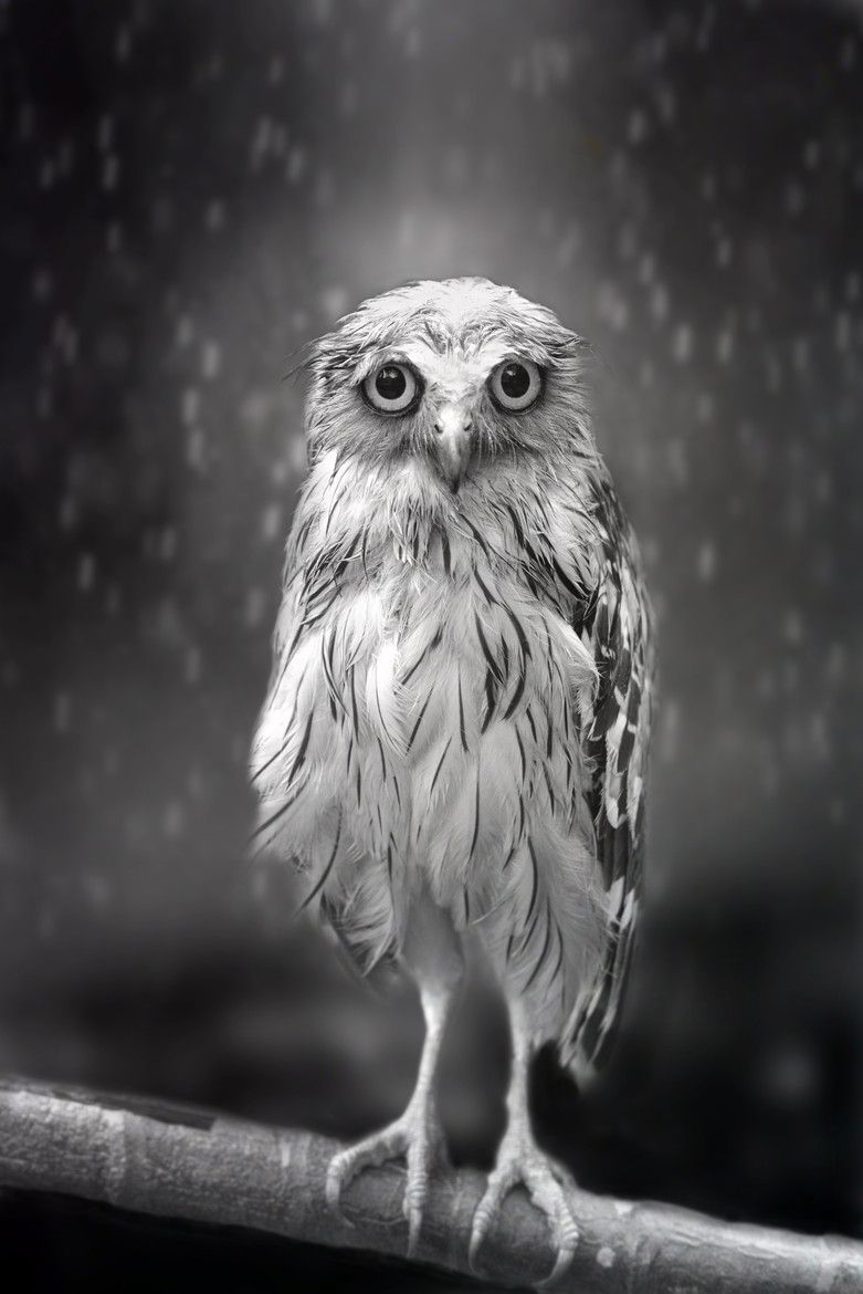 Standing in the rain by sham jolimie black and white photography