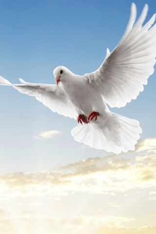 A White Dove Is A Traditional Christian Symbol Of Love And Peace