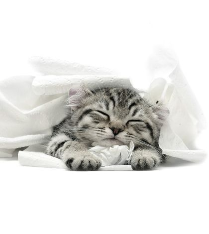 cat bath cage