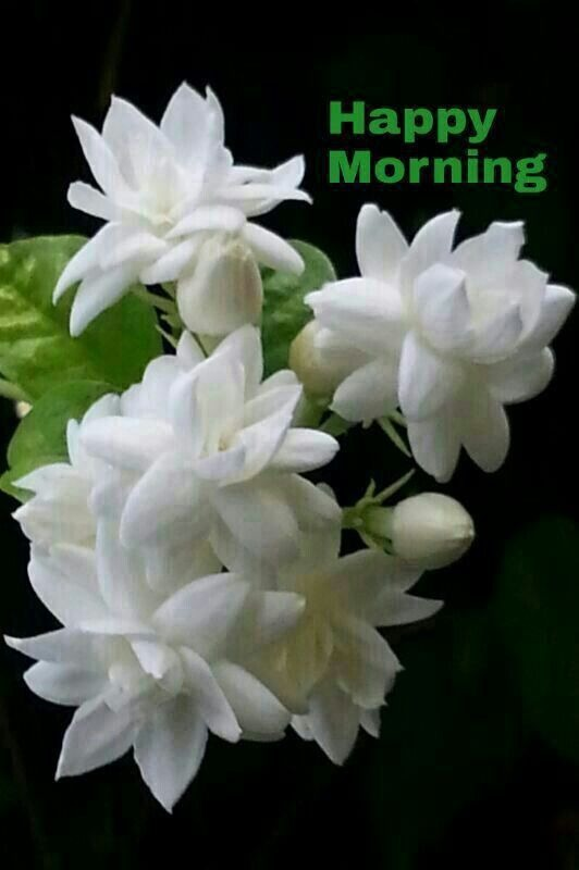 Pin By Avdhesh Singh On Good Morning Roses Good Morning Roses Good Morning Gif Good Morning My Friend