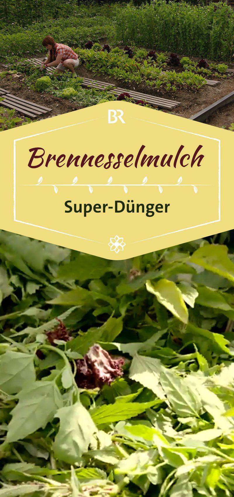 Querbeet Garten Tipp Brennnesselmulch Br De Garten Gartentipps Garten Pflanzen