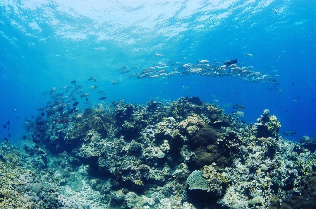 宮古島でシュノーケリングダイビングにオススメのマリンショップポイントビーチ教えてください#オーストラリア#ケアンズ#クイーンズランド州#グレートバリアリーフ#珊瑚#海#青#アウターリーフ#シュノーケリング#スキンダイビング#ダイビング#australia #cairns#queensland#greatbarrierreef#ocean#sea#blue#underthesea#coral#outerreef#snorkeling#skindiving#diving by underthesea_24 http://ift.tt/1UokkV2