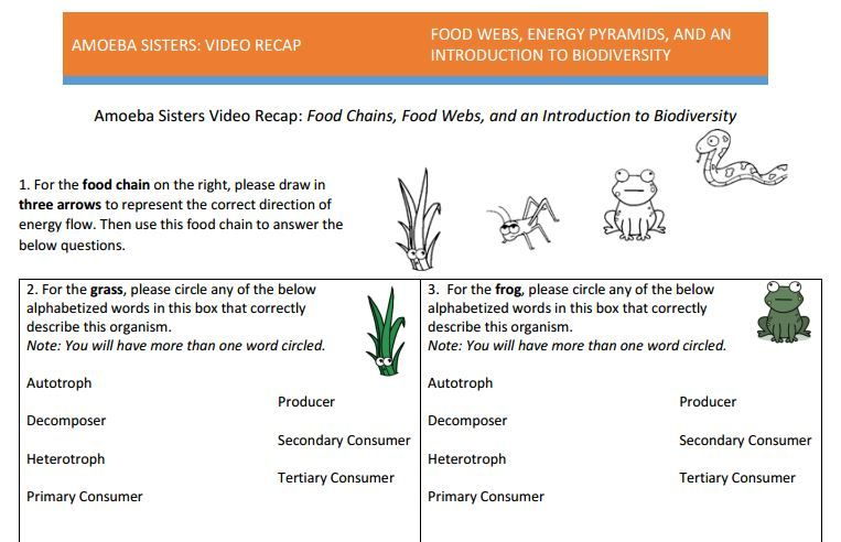 Animal Needs Worksheets Word Food Web Handout Made By Amoeba Sisters Click To Visit The  Grade 1 Printable Worksheets Excel with Guide Word Worksheets Excel Food Web Handout Made By Amoeba Sisters Click To Visit The Website And  Scroll Down To Download The Pdf  Amoeba Sisters Handouts  Pinterest  Food  Webs  Story Mountain Worksheet Pdf