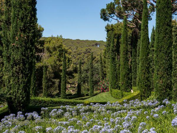 Mediterrane Gärten Bilder mediterranes flair a bis z agapanthus und zypressen im garten