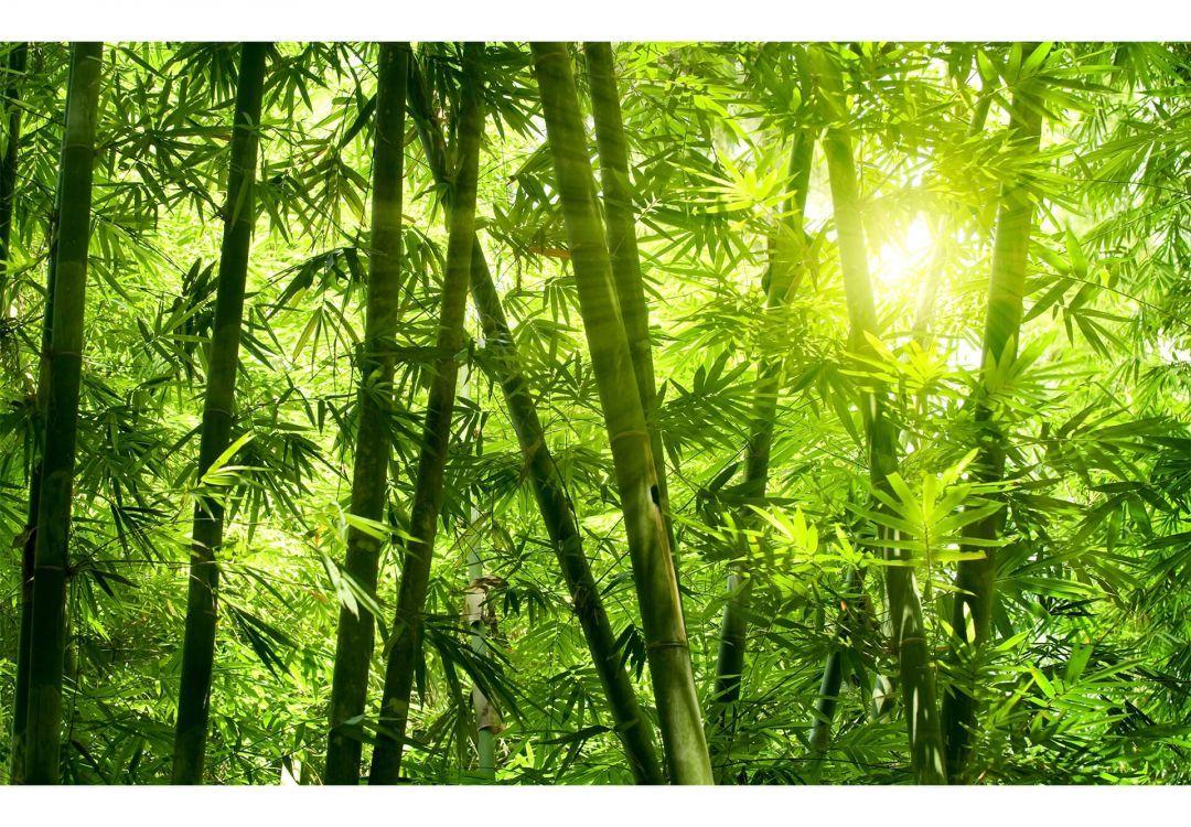 Fototapete Sonnenschein Im Bambuswald Jl S Place Bamboo Wall