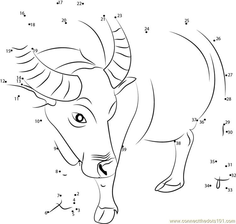 Buffalo Connect Dots Download Picture Super Coloring Pages