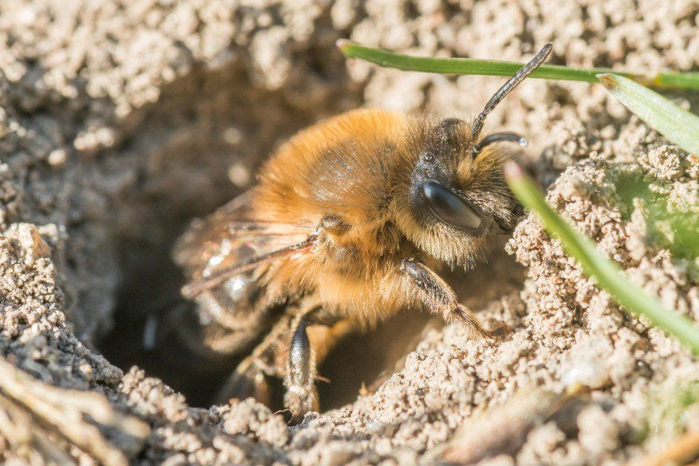 3 simple but effective ways to get rid of ground bees