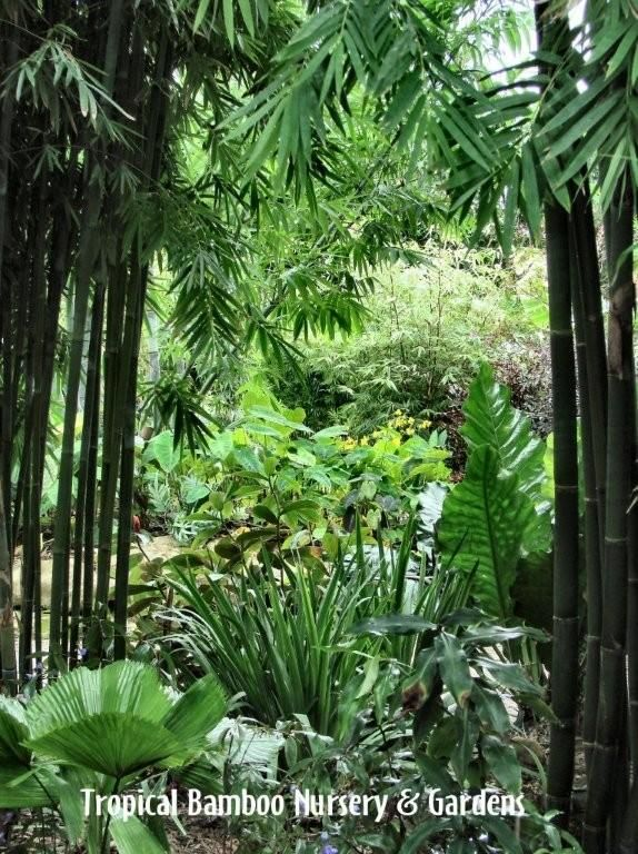 Tropical Bamboo Garden | ~You'll Find Me in the Garden~ | Small