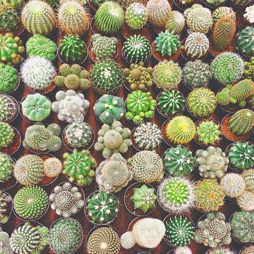 Living Young. Outdoor Cactus GardenCacti ...