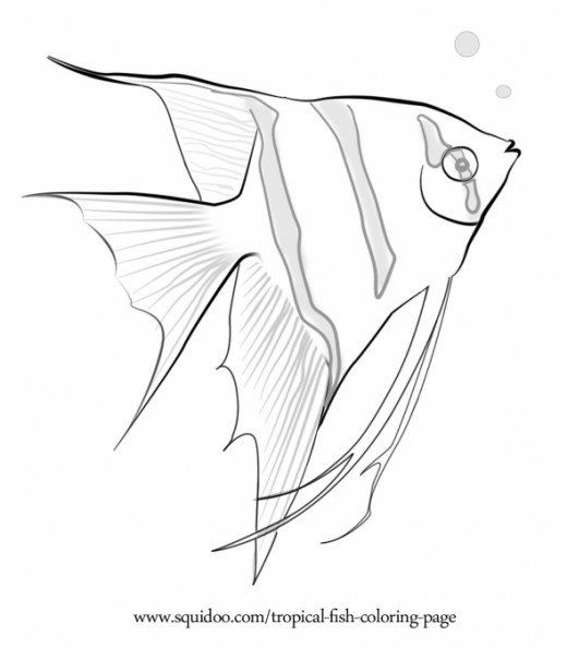 Freshwater Fish Coloring Pages. Exotic and delightful freshwater marine fishes can be found in this  collection of tropical fish coloring page These aquatic creatures usually thrives Tropical Fish Coloring Page Marine Aquariums