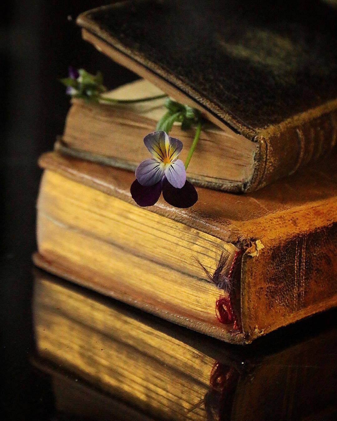 Pin By Tatyana Sazhneva On Nezhnye Kartinki In 2020 Book Flowers Antique Books Old Books