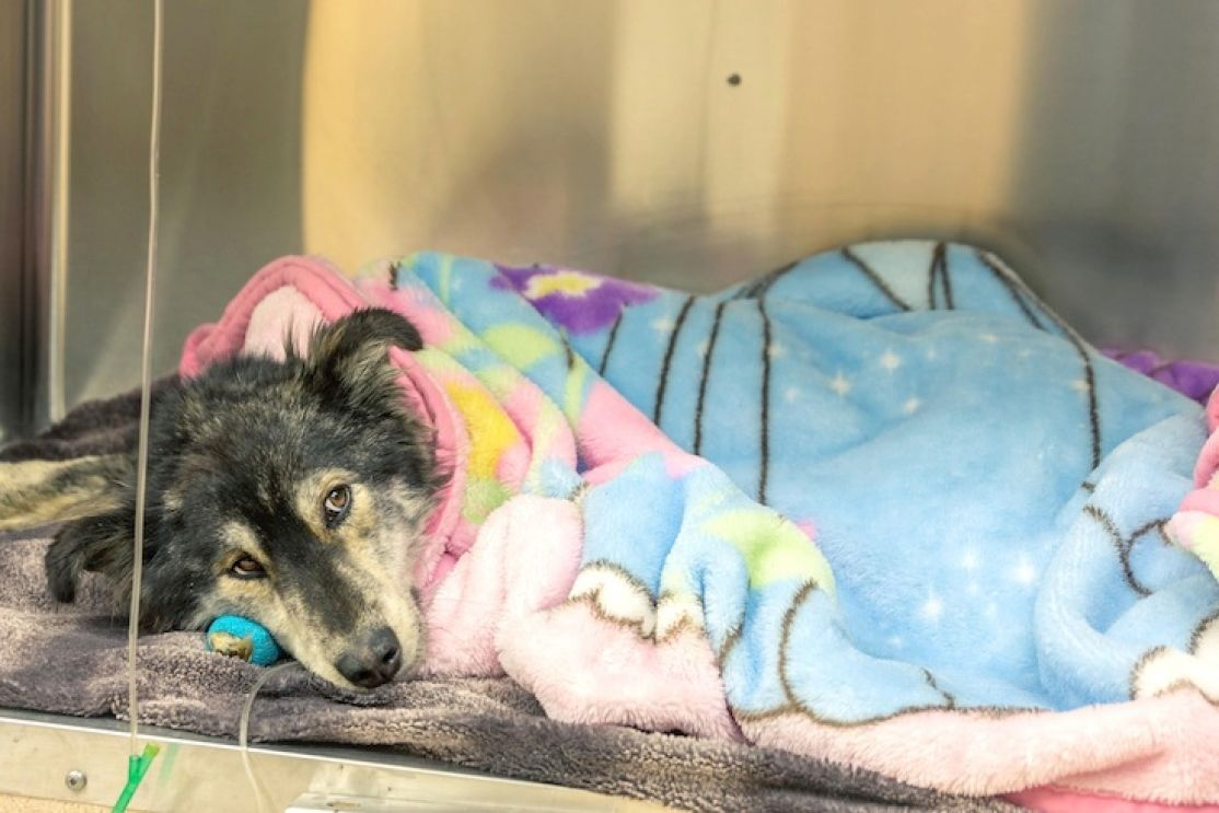 Port Hardy dog rescued from most 'horrific' case BC SPCA