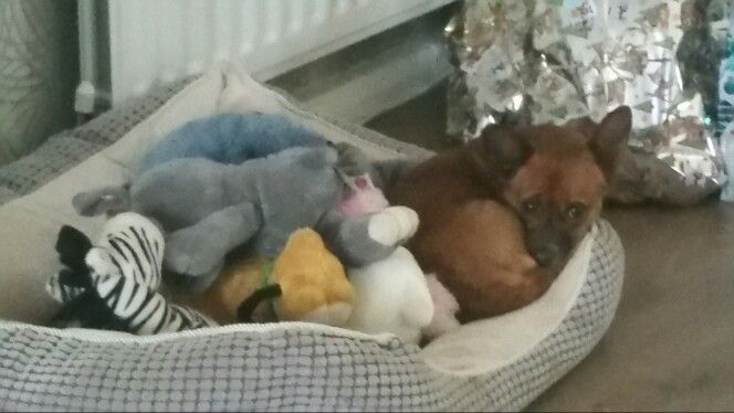 Rusty sharing her bed