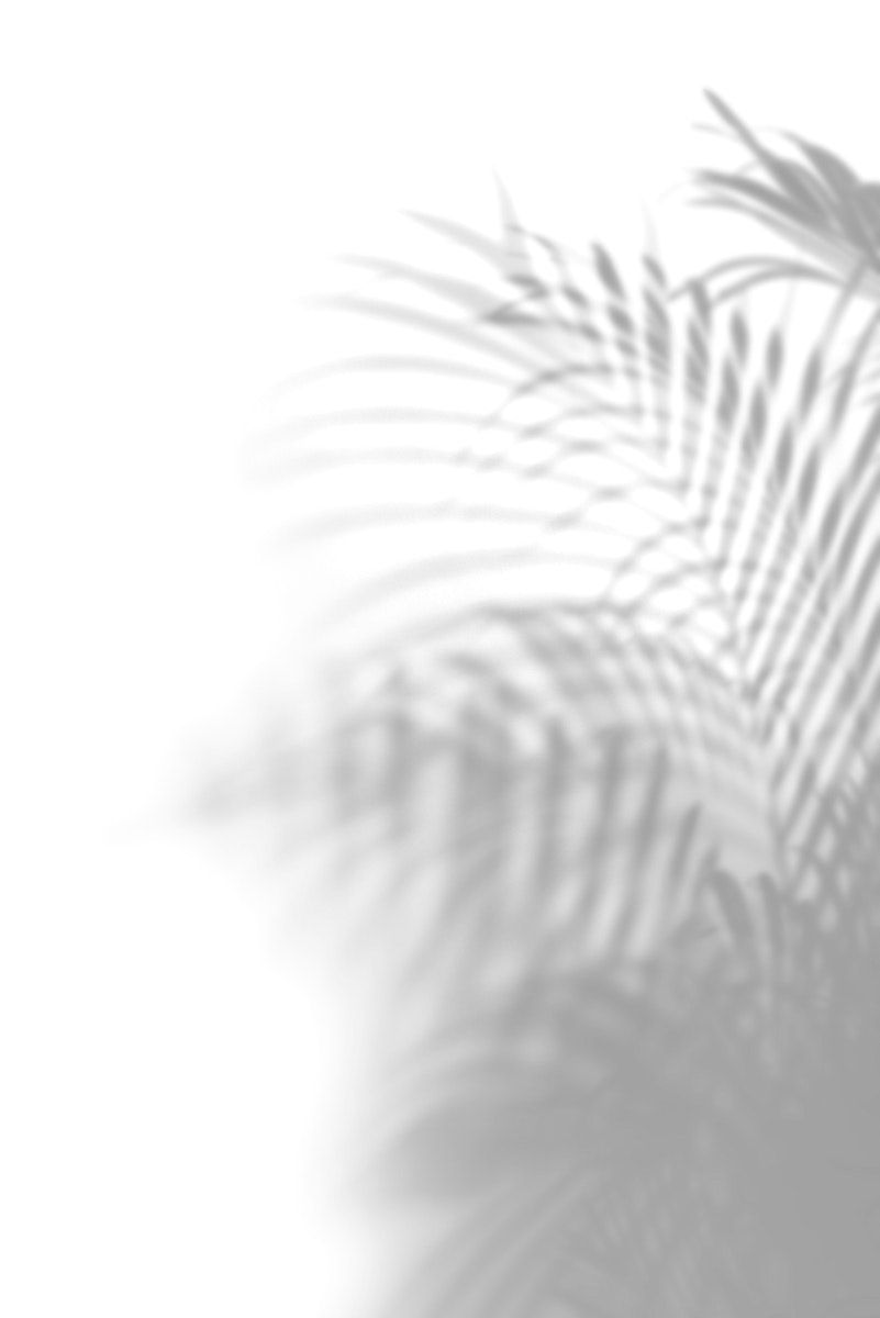 Download Premium Psd Of Shadow Of Leaves On A Wall 556160 Shadow Plants Shadow Shadow Photos