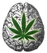 MarijuanaLeafBrain