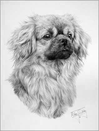 Epingle Par Im No One Sur Realism Drawing Chien Du Tibet Portrait Dessin Chien