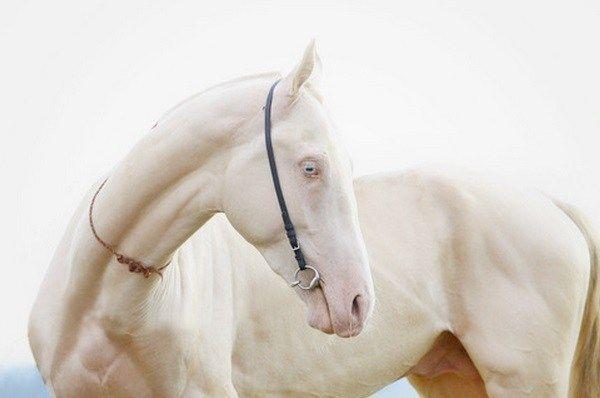 Top 10 Pictures Of The Rarest Albino Animals #albinoanimals