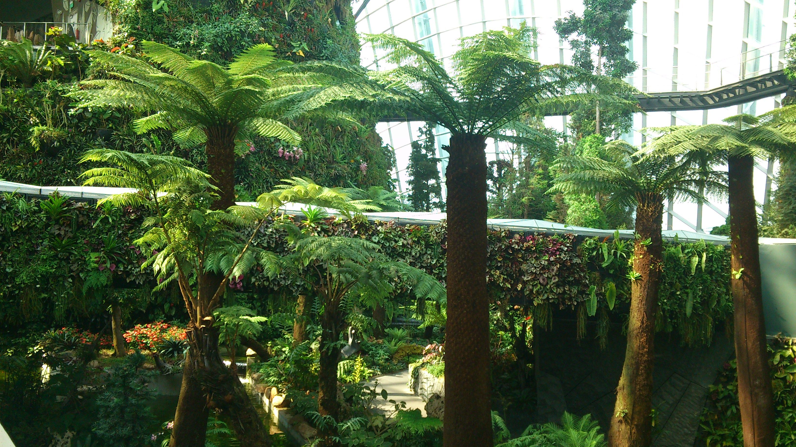 Tree Ferns in the Cloud Forest, Gardens by the bay