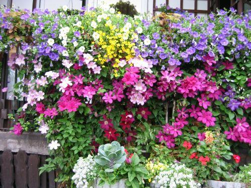 Zobacz Watek Rosliny Na Sloneczny Balkon Plants Flowers Balcony