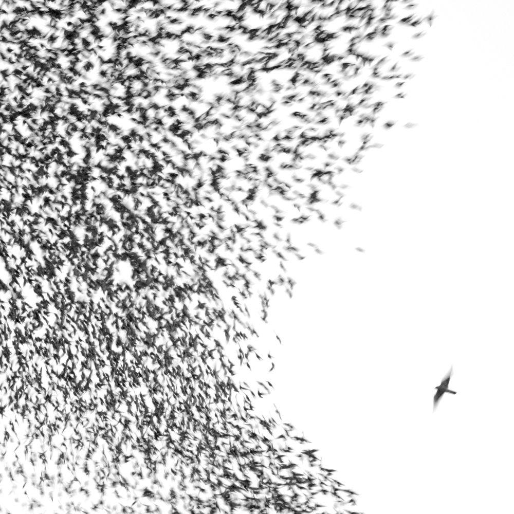 Wilco Sky Blue Sky Cool Album Covers Best Albums Album Covers