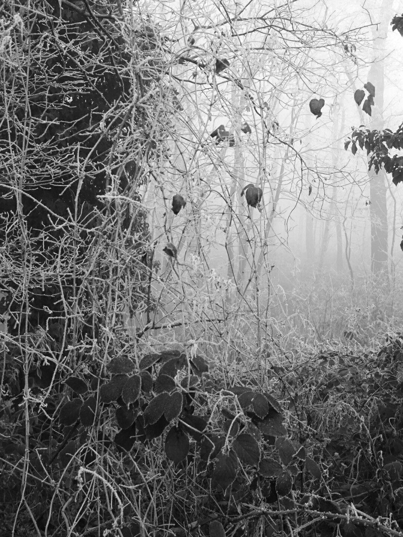 Pierre Pentchev,  forêt de Montmorency