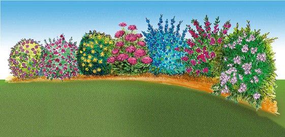 colis sp cial haie fleurie basse jardin pinterest haies arbuste pour haie et ventes directes. Black Bedroom Furniture Sets. Home Design Ideas