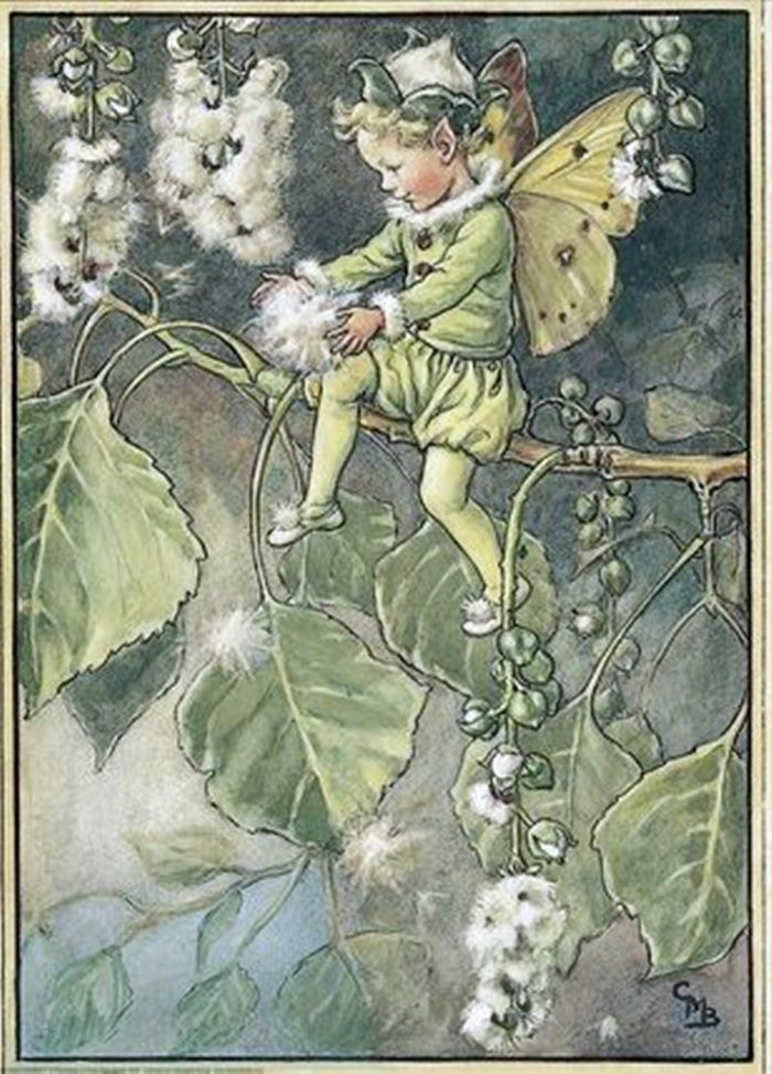 Illustration for the poplar fairy jardin f erique pinterest f es des fleurs image de f e - Dessin lampion ...