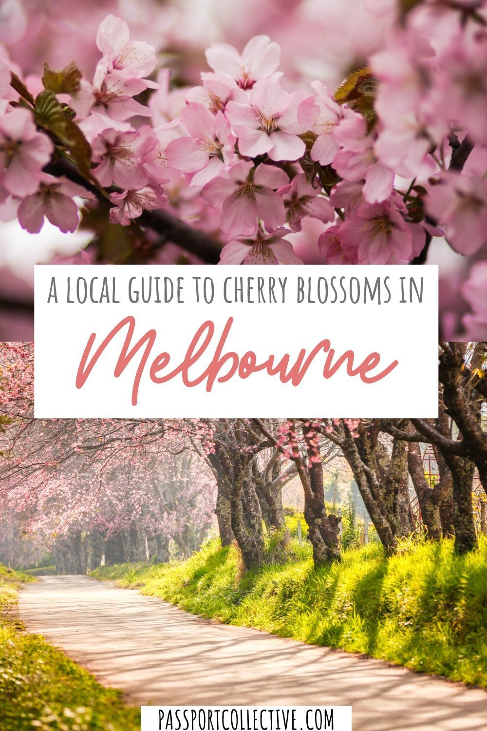 A Local S Guide To The Best Cherry Blossoms In Melbourne City Of Adelaide Vacation Trips Melbourne Travel